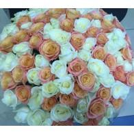 101 роза бело-коралловый микс