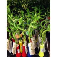 Бамбук в цветной бутылке