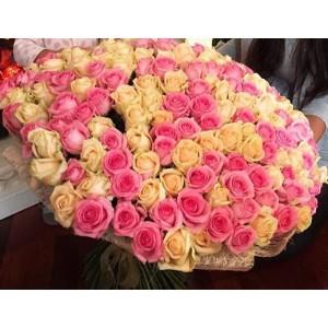 101 розово-кремовая роза