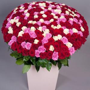 Букет «301 роза»