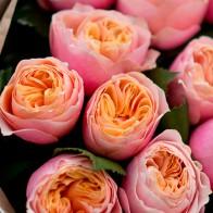 Пионовидные розы Вувузела