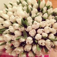 """Букет """"101 белый тюльпан"""""""