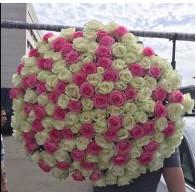 151 роза бело-розовый микс