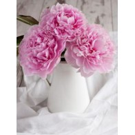 3 розовых пиона