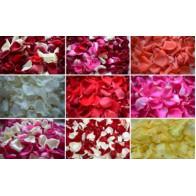 Лепестки разноцветных роз