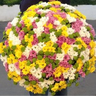 Букет из 101 хризантемы микс