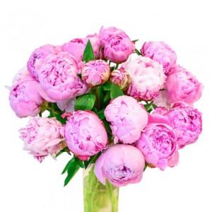 Букет из 19 розовых пионов спб