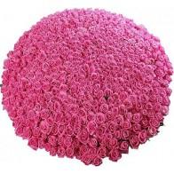 301 роза
