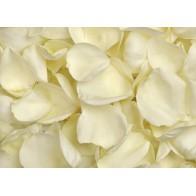 Лепестки белых роз