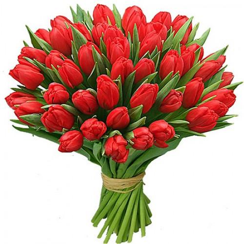 http://flowersmania.ru/image/cache/data/49r_tulpan-500x500.jpg