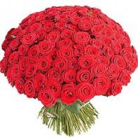 101 красная роза 60 см СПБ