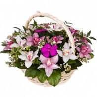 Корзина цветов «Красота орхидей»