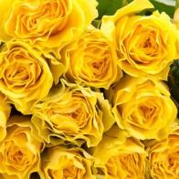 Роза желтая 50 см (19 шт.)