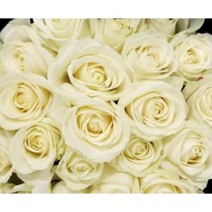 Букет невесты из 25 белых роз