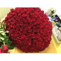 251 красная роза