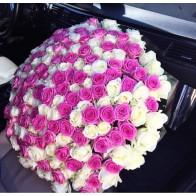 201 роза бело-розовый микс