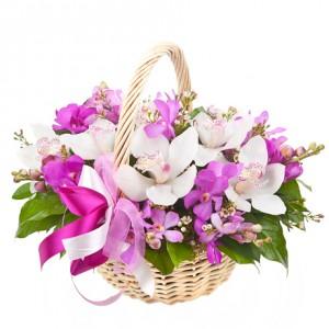 Корзина орхидей «Неженка»