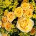 Букет «Желтый микс»