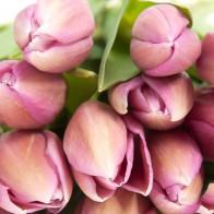 Тюльпан Розовый (39 шт.)