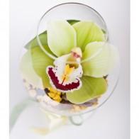 Орхидея в коньячном бокале
