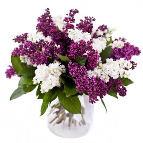 http://flowersmania.ru/image/cache/data/images/glavv_466-500x500.jpg