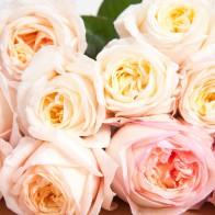 Франц. роза Романтика (12 шт.)