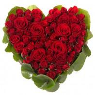 Cердце 75 красных роз