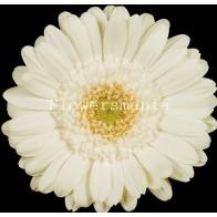 Гермини белая (15 шт.)